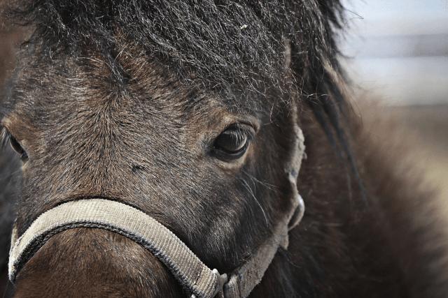 戦のための馬はどのように扱っていたのか